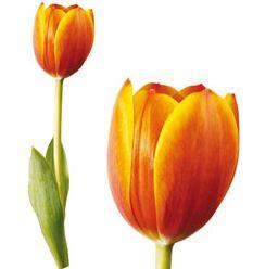 adhesivo decorativo parede tulipan