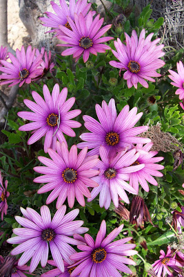 como conservar las flores en jarrones por mas tiempo