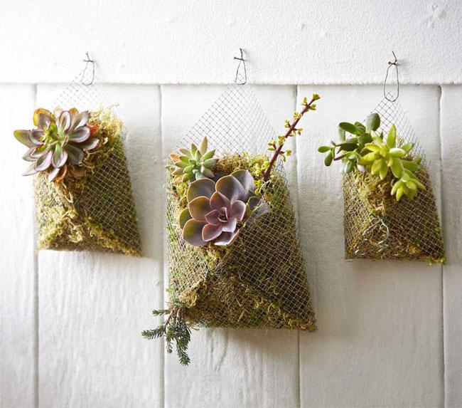 Decorar con plantas suculentas.