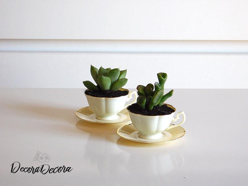 Plantas tazas