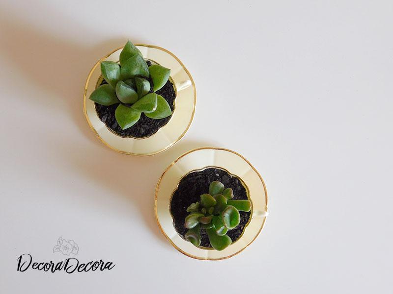 Tazas para plantas