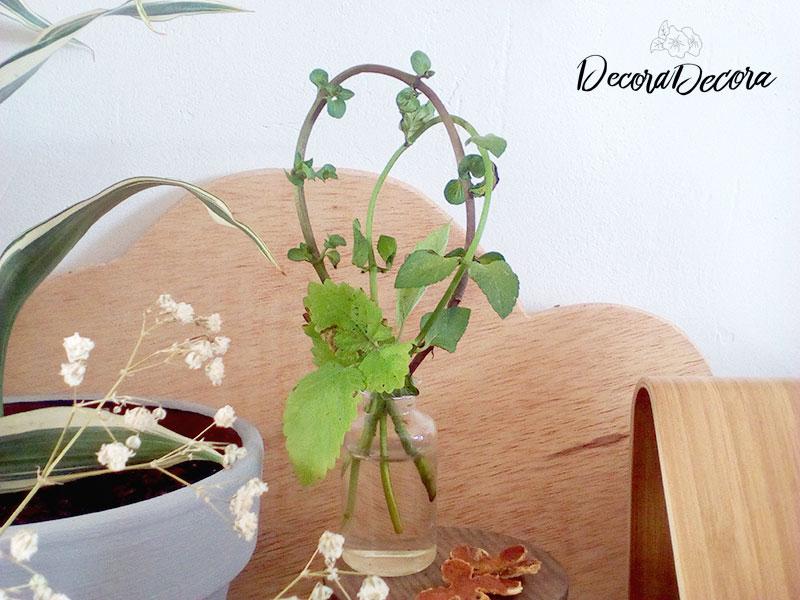 Idea para decorar con menta