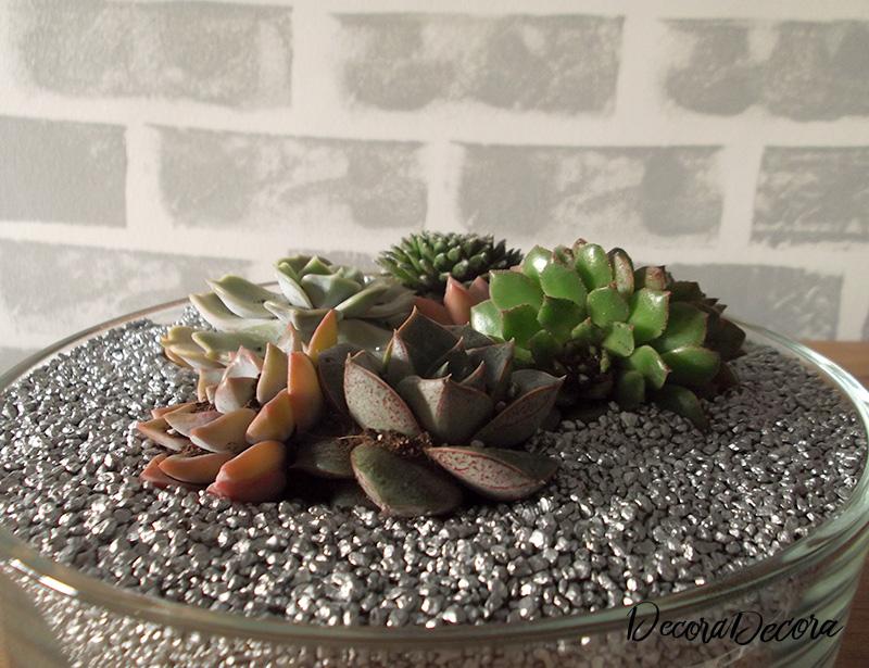 Centro con plantas suculentas