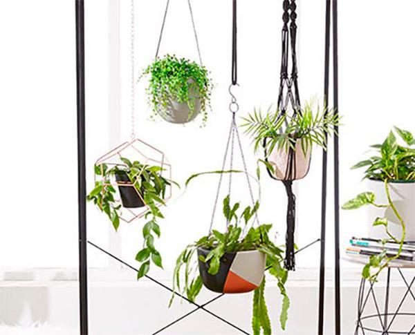 Decorar con plantas colgantes
